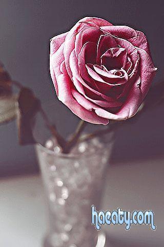 صور خلفيات زهور جميلة ايفون 2014
