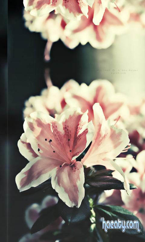 اجمل خلفيات جالكسى زهور 2014