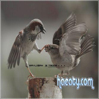 اجمل خلفيات طيور للجلاكسى 2014