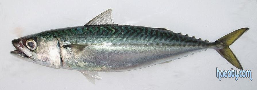 فوائد سمك الماكريل للصحة الجسم