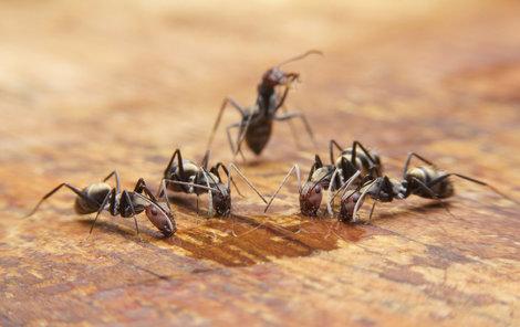 القضاء علي النمل الابيض